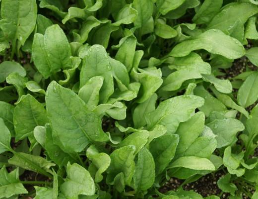 spinach-506616_1920-min